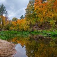 Золотая осень на реке Снежеть :: Александр Березуцкий (nevant60)