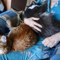 Кошки :: Николай Холопов
