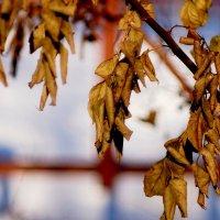 останки осенних цветов 3 :: Александр Прокудин