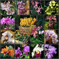 Орхидеи коллаж :: Наталия Короткова