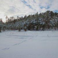 Следы вечернего леса... :: Laborant Григоров