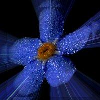 или медуза :: Владимир Хатмулин