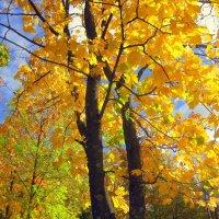 Золотая осень :: Leonid Tabakov