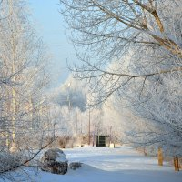 Парк зимой. :: Юрий Фёдоров