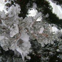 После ледяного дождя :: Марина Домосилецкая