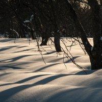 Волны в замерзшем саду :: Alexander Petrukhin