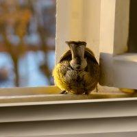 хвостик :: linnud