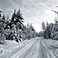 Зимняя дорога :: Leonid Rutov