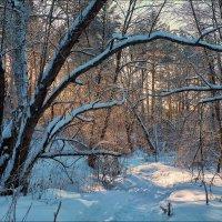 Волшебный лес :: Николай