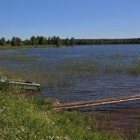 Летом на озере. :: Галина .