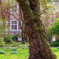 Необычные деревья (серия). Арт от природы :: Nina Yudicheva