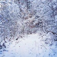 Сказка в зимнем лесу :: Андрей Гриничев