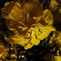 жёлтая тишь :: Роза Бара