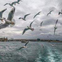 Чистый полет над зимним Босфором! :: Леонид Нестерюк