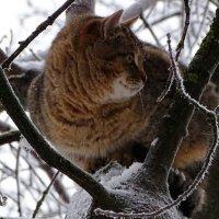 Кошачий профиль :: Милешкин Владимир Алексеевич