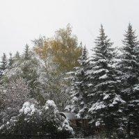 Снежному сезону больше снега. :: Вячеслав Медведев