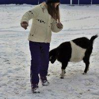 Идёт коза рогатая... :: Николай Масляев