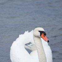 море и лебеди 5 :: Игорь Гарагуля