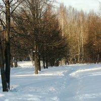 тропинка в лес :: Елена Мир