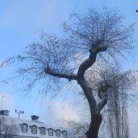 зима в Стокгольме :: Елена
