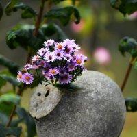 Цветы :: Владимир Сысоев
