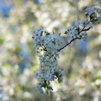 Весна :: Максим Бобков