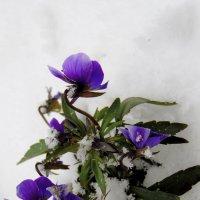 Зазимовавшие цветы. :: nadyasilyuk Вознюк