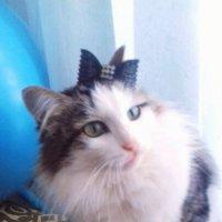 My cat :: Юлия Шабалдина