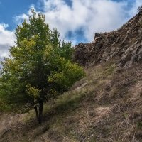 Дерево :: Андрей Бондаренко