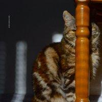фотосет для любимой кици) :: Роза Бара