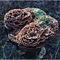 Зимние грибочки. :: Валерия Комова
