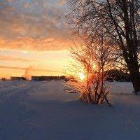 Зимний рассвет :: Павлова Татьяна Павлова