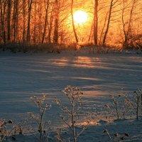 Солнце всходит... :: Галина Ильясова