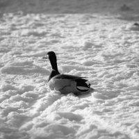 А поплавать то и негде :: Svetik