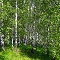 На опушке леса. :: оля san-alondra