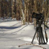 Nikon на пленэре ... :: Va-Dim ...