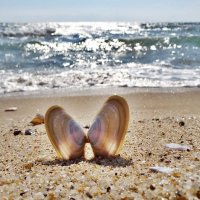 Морская бабочка :: Swetlana V