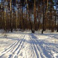 Лыжня зовёт! :: Андрей Лукьянов