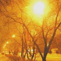 Солнечная аллея, зимний вечер 1 :: Жанна Литуева