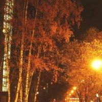 Солнечная аллея, осенний вечер :: Жанна Литуева