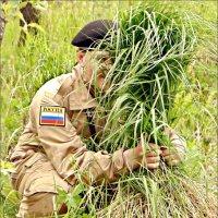 Моя зелёная поросль... :: Кай-8 (Ярослав) Забелин