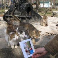 Дополнительный урок по эстетическому воспитанию в школе кошек... :: Алекс Аро Аро