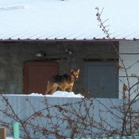 Ох, рано , встаёт охрана ! :: Мила Бовкун