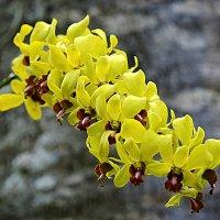 """В """"Парке птиц"""" на острове Бали есть и цветы :: Асылбек Айманов"""