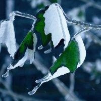 Ледяные листья :: Елизавета Митрофанова