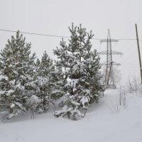 Зимний день :: Людмила Якимова