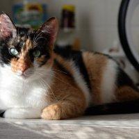 Кошечка Муся разрешила сделать фото... :: Anatolyi Usynin