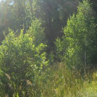 лес :: Александр Попков