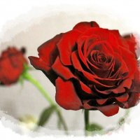 Как хороши, как свежи ныне розы . :: Валентина ツ ღ✿ღ