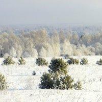 Занесённые снегом. :: nadyasilyuk Вознюк